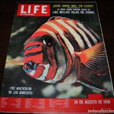 Coleccionismo de Revistas y Periódicos: REVISTA LIFE EN ESPAÑOL - 24 AGOSTO 1959 - EN PORTADA: ARRECIFES DE CORAL. Lote 104745751