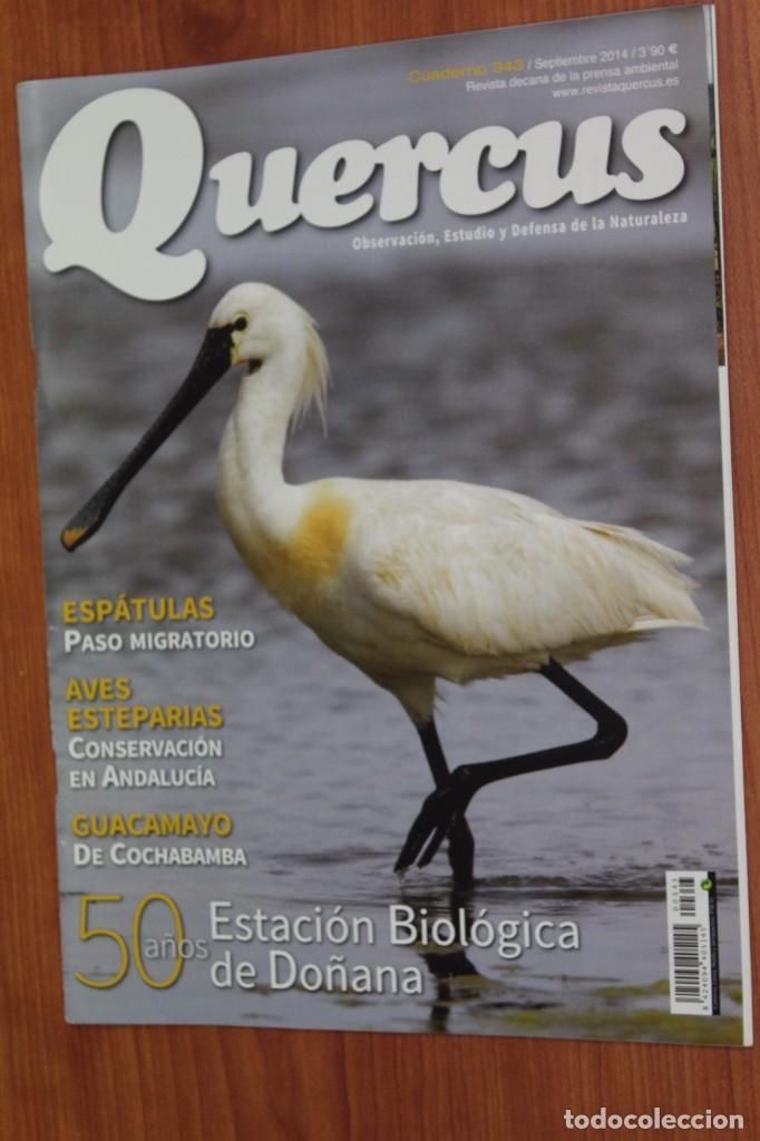REVISTA QUERCUS - CUADERNO 343 - SEPTIEMBRE 2014 DOÑANA, ESPATULA, GUACAMAYO, AVES ANDALUCIA (Coleccionismo - Revistas y Periódicos Modernos (a partir de 1.940) - Otros)