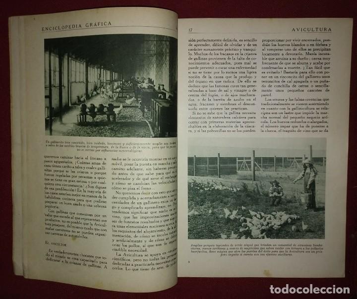 Coleccionismo de Revistas y Periódicos: AVICULTURA ENCICLOPEDIA GRÁFICA - MACARIO GOLFERICHS-LUIS G. MANEGAT - BARCELONA 1930 - Foto 3 - 116425483