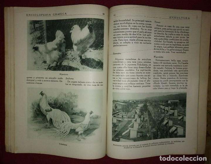 Coleccionismo de Revistas y Periódicos: AVICULTURA ENCICLOPEDIA GRÁFICA - MACARIO GOLFERICHS-LUIS G. MANEGAT - BARCELONA 1930 - Foto 4 - 116425483