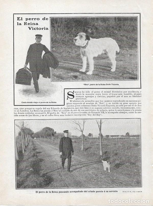 1908 HOJA REVISTA PERRO DE LA REINA VICTORIA REX REGALO REY EDUARDO DE INGLATERRA (Coleccionismo - Revistas y Periódicos Antiguos (hasta 1.939))