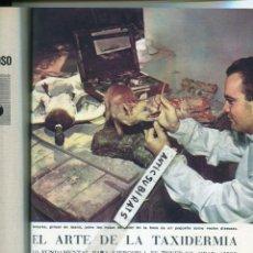 Coleccionismo de Revistas y Periódicos: REVISTA 1959 TAXIDERMIA UROGALLO FOTOS DE ELDA ALICANTE HERMANOS ROMERO TORREJON DEL RUBIO CACERES. Lote 150566322