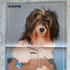 Coleccionismo de Revistas y Periódicos: POSTER REVISTA TELE INDISCRETA - PIPPIN - MIDE 41 X 28 C.M.. Lote 151668714