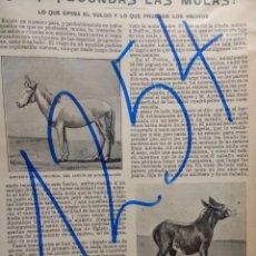 Coleccionismo de Revistas y Periódicos: MULAS. FERTILIDAD. 1904.. Lote 155842110