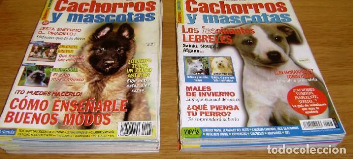 23 REVISTAS CACHORROS Y MASCOTAS. (Coleccionismo - Revistas y Periódicos Modernos (a partir de 1.940) - Otros)