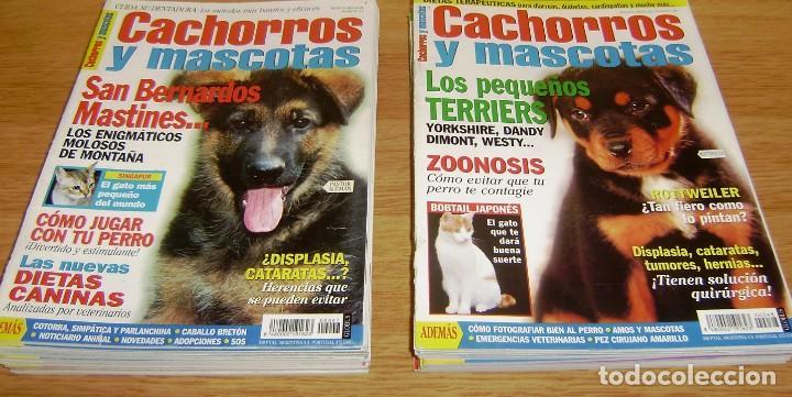 Coleccionismo de Revistas y Periódicos: 23 Revistas cachorros y mascotas. - Foto 2 - 156570446