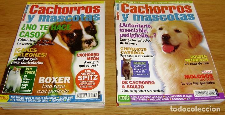 Coleccionismo de Revistas y Periódicos: 23 Revistas cachorros y mascotas. - Foto 3 - 156570446