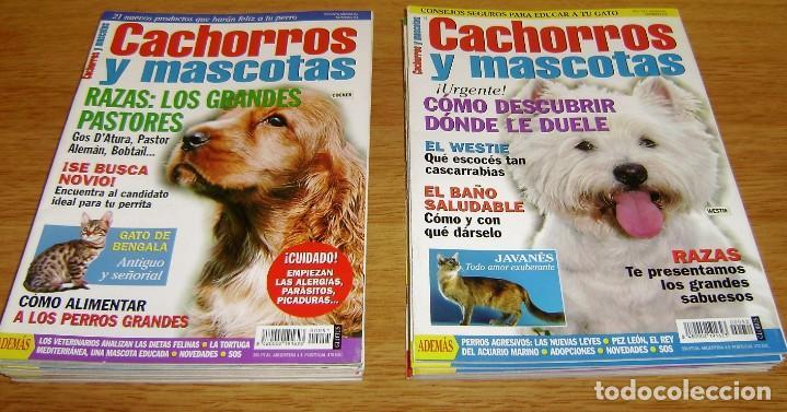 Coleccionismo de Revistas y Periódicos: 23 Revistas cachorros y mascotas. - Foto 4 - 156570446