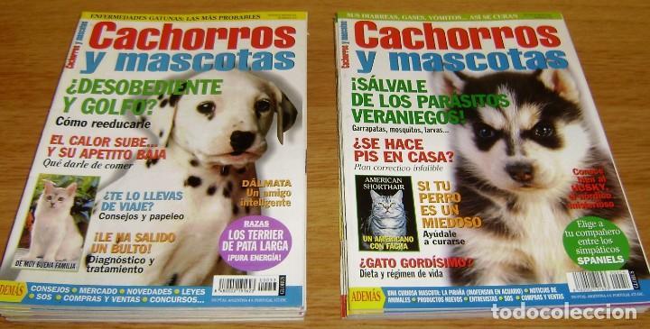 Coleccionismo de Revistas y Periódicos: 23 Revistas cachorros y mascotas. - Foto 5 - 156570446