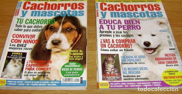 Coleccionismo de Revistas y Periódicos: 23 Revistas cachorros y mascotas. - Foto 7 - 156570446
