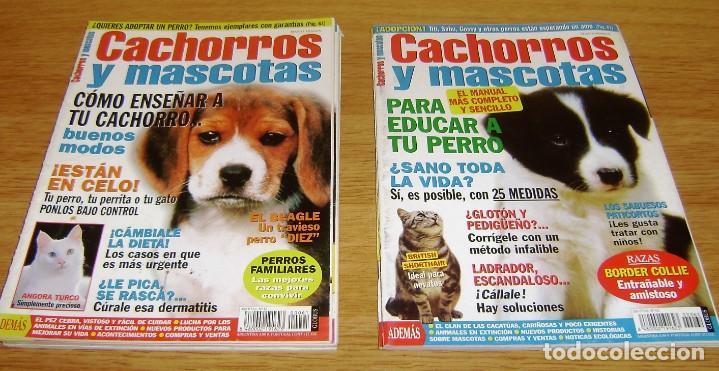 Coleccionismo de Revistas y Periódicos: 23 Revistas cachorros y mascotas. - Foto 9 - 156570446