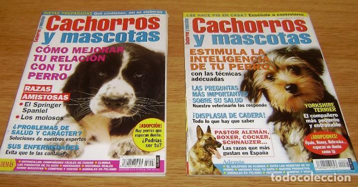 Coleccionismo de Revistas y Periódicos: 23 Revistas cachorros y mascotas. - Foto 10 - 156570446