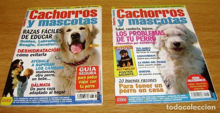 Coleccionismo de Revistas y Periódicos: 23 Revistas cachorros y mascotas. - Foto 11 - 156570446