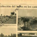 Coleccionismo de Revistas y Periódicos: PERIODICO DESTINO AÑO 1939 POSGUERRA RECOLECCION DEL ARROZ EN EL DELTA DEL EBRO AMPOSTA. Lote 160549590