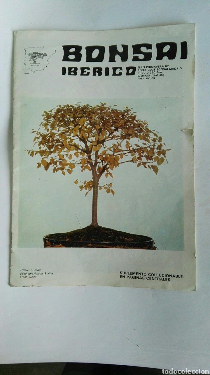 REVISTA BONSAI IBÉRICO (Coleccionismo - Revistas y Periódicos Modernos (a partir de 1.940) - Otros)