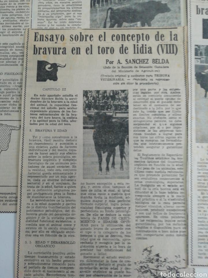 Coleccionismo de Revistas y Periódicos: Antiguos recorte de periódicos temática de toros,años (60/70) - Foto 2 - 207300453