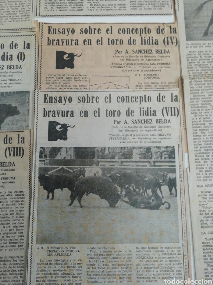Coleccionismo de Revistas y Periódicos: Antiguos recorte de periódicos temática de toros,años (60/70) - Foto 3 - 207300453