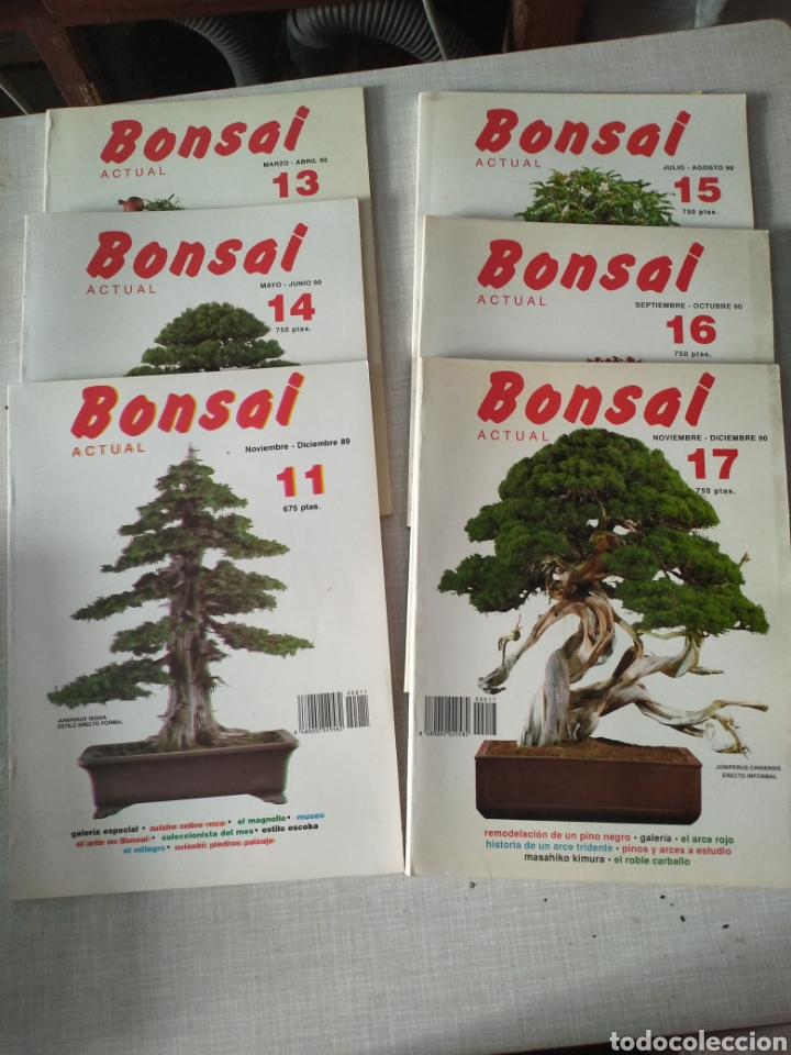 Revista Bonsai Actual 1988 Numeros Suelto Buy Other Modern Magazines And Newspapers At Todocoleccion 215548073