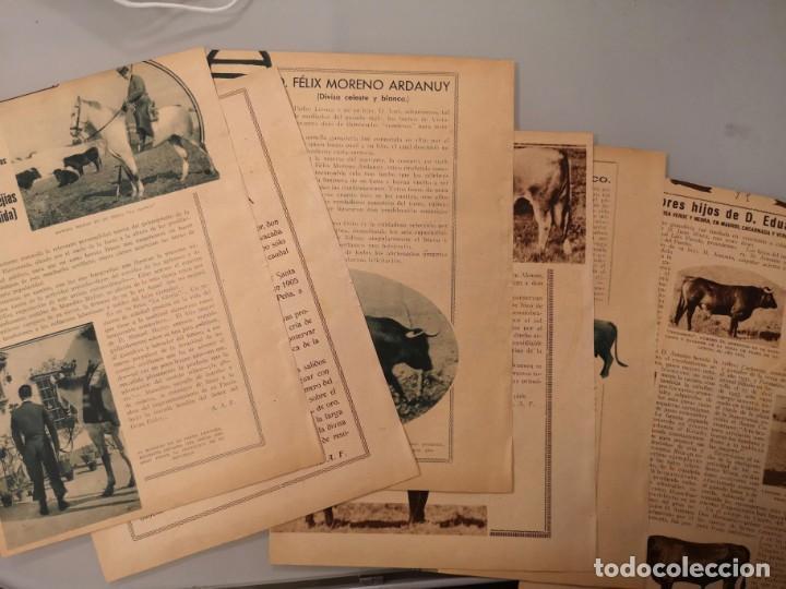 Coleccionismo de Revistas y Periódicos: REPORTAJE REVISTA ORIGINAL ANTIGUO. EL TORO BRAVO EN EL CAMPO ANDALUZ, MANUEL MEJIAS Y EDUARDO MIURA - Foto 2 - 252897145