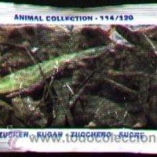 Sobres de azúcar de colección: SOBRE DE AZUCAR CON FOTO DE ANIMAL