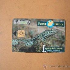 Tarjetas telefónicas de colección: TARJETA TELEFONICA ESPAÑA,FAUNA IBERICA,LAGARTIJA DE LAS PITIUSAS, 1000 PESETAS. Lote 27656076
