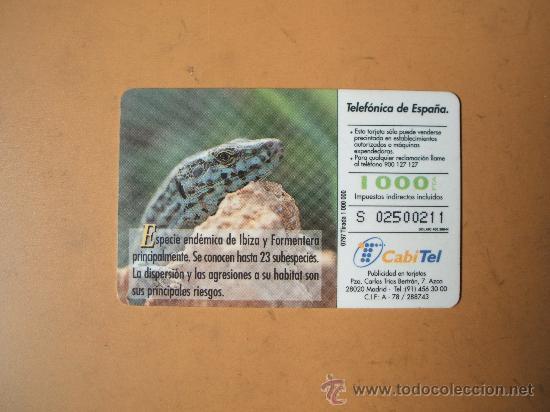 Tarjetas telefónicas de colección: tarjeta telefonica españa,fauna iberica,lagartija de las pitiusas, 1000 pesetas - Foto 2 - 27656076