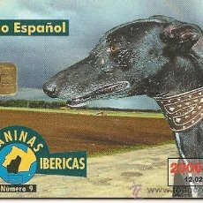 Tarjetas telefónicas de colección: TARJETA TELEFÓNICA - SERIE RAZAS CANINAS IBÉRICAS - GALGO ESPAÑOL. Lote 35675095