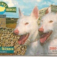 Tarjetas telefónicas de colección: TARJETA TELEFÓNICA - SERIE RAZAS CANINAS IBÉRICAS - PODENCO IBICENCO. Lote 35675134