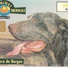 Tarjetas telefónicas de colección: TARJETA TELEFÓNICA - SERIE RAZAS CANINAS IBÉRICAS - PERDIGUERO DE BURGOS. Lote 35675168