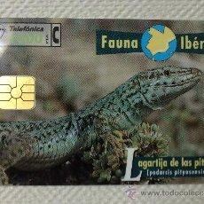 Tarjetas telefónicas de colección: TARJETA DE TELEFONOS AÑOS 90-FAUNA IBERICA, LAGARTO- USADA. Lote 37943834