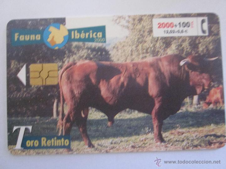 TARJETA TELEFONICA ESPAÑA TORO RETINTO. FAUNA IBERICA. AÑO 2000. TIRADA 501.500 (Coleccionismo - Tarjetas Telefónicas)