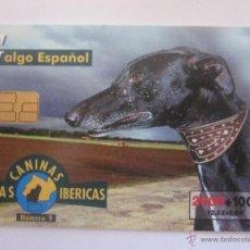 Tarjetas telefónicas de colección: TARJETA TELEFONICA ESPAÑA GALGO ESPAÑOL FAUNA IBERICA. TIRADA 751.500. AÑO 2000. Lote 48188136