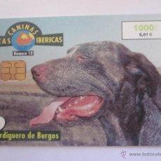 Tarjetas telefónicas de colección: TARJETA TELEFONICA ESPAÑA PERDIGUERO DE BURGOS FAUNA IBERICA. TIRADA 851.500. AÑO 2000. Lote 48188482