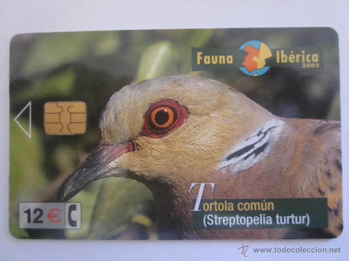 TARJETA TELEFONICA ESPAÑA TORTOLA COMUN. FAUNA IBERICA. TIRADA 501.000. AÑO 2002 (Coleccionismo - Tarjetas Telefónicas)