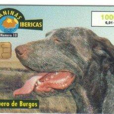 Tarjetas telefónicas de colección: TARJETA TELEFONICA RAZAS IBERICAS PERROS 10/ 2000 PERDIGUERO DE BURGOS USADA VER DETALLE TT. Lote 183309215