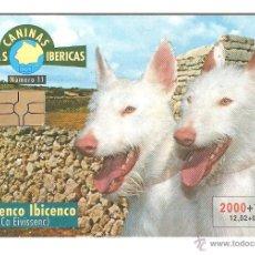 Cartões de telefone de coleção: TARJETA TELEFONICA TELEFONO PERROS PODENCO. Lote 209768831
