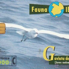 Tarjetas telefónicas de colección: ESPAÑA. FAUNA IBÉRICA. GAVIOTA DE AUDOVIN. Lote 53344486