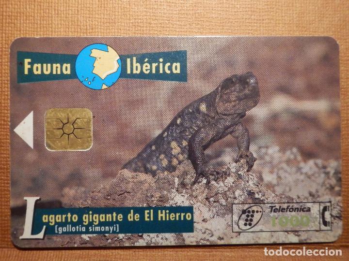 TARJETA TELEFÓNICA USADA - FAUNA IBÉRICA - LAGARTO DEL HIERRO - 0797 - AÑO 1997 - TIRADA 1.000.000 (Coleccionismo - Tarjetas Telefónicas)