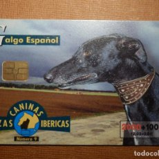 Cartes Téléphoniques de collection: TARJETA TELEFÓNICA USADA - RAZAS CANINAS IBÉRICAS - GALGO ESPAÑOL - 0700 - 2000 - TIRADA 751.500. Lote 78819901