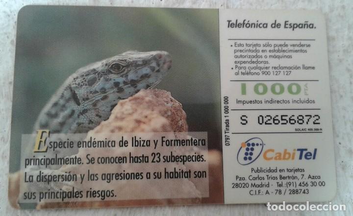 Tarjetas telefónicas de colección: Lagartija de las pitiusas - Tarjeta telefónica - Fauna ibérica - 1000 ptas - Foto 2 - 130240874