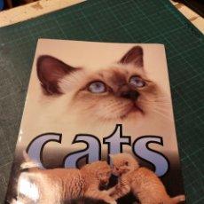 Tarjetas telefónicas de colección: CATS. Lote 295332968