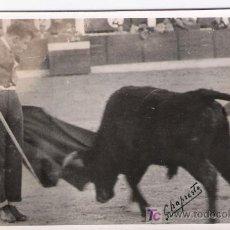 Tauromaquia: FOTOGRAFÍA 9X14.PEPE ORDOÑEZ.DEDICADA AL DORSO POR EL TORERO:COMO RECUERDO DE TUDELA,UN ABRAZO Y FIR. Lote 16809928