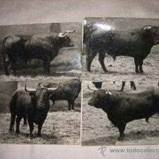 Tauromaquia: 4 FOTOS DE TOROS. Lote 19869830
