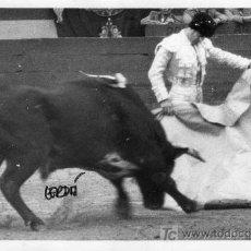 Tauromaquia: FOTOGRAFIA ORIGINAL DE JOSE CERDÁ AL TORERO DIEGO PUERTA TOREANDO DE CAPOTE.. Lote 19036545