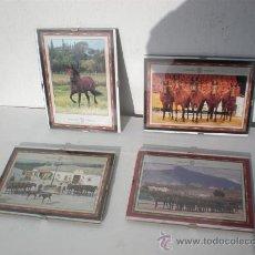 Tauromaquia: 4 FOTOGRAFIAS O POSTALES GRANDES DE CABALLOS. Lote 23707443