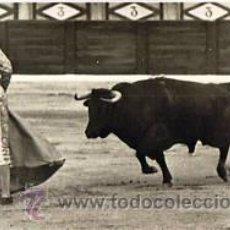 Tauromaquia: 9 POSTALES DEL TORERO.PEDRO MARTINEZ-PEDRÉS. FOTOGRAFIA.CHAPRESTO EXCLUSIVAS FOTOGRAFICAS. EDITOR.G. Lote 32956953