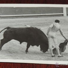 Tauromaquia: FOTOGRAFIA ORIGINAL DE MANOLETE, MANUEL RODRIGUEZ , TOROS , REVERSO CON SELLO FOTO ORTIZ, MIDE 14 X . Lote 41631215