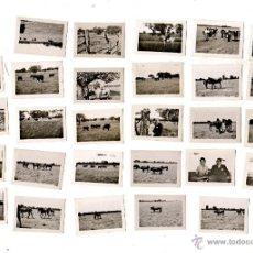 Tauromaquia: LOTE DE 30 MICROFOTOGRAFIAS TAURINAS. ESCENAS DE DEHESA.. Lote 47698545