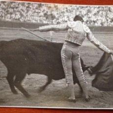 Tauromaquia: FOTO ORIGINAL LUIS MIGUEL DOMINGUIN CORRIDA DE TOROS SEVILLA 1946. Lote 54079509
