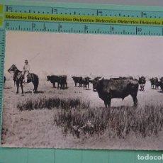 Tauromaquia: POSTAL DE TOROS TAUROMAQUIA. AÑOS 30 50. LA CAMARGUE FRANCIA. MANADA DE TOROS. 1089. Lote 98510659